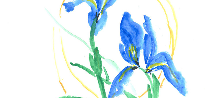 Blue Irises by Jean A.