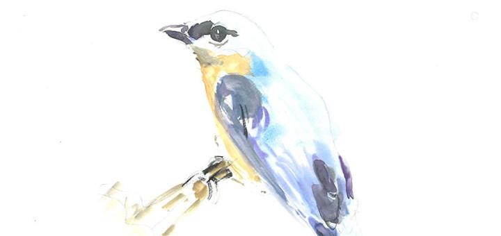 Bluebird by Corinne