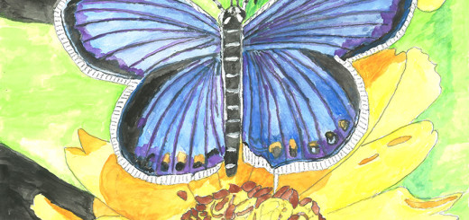 Glorious Butterfly by Dr. Hyman M.